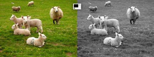 Převod fotografie na černobílou pomocí mapování z přechodu