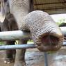 Slon je maskotem PostgreSQL, CC BY-SA Greg George