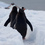 Foto pinguino
